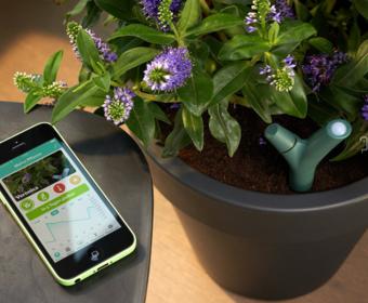 Биологический аккумулятор позволит заряжать смартфоны от растений