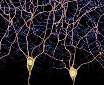 Геймеры помогают ученым исследовать головной мозг и открывать новые типы нейронов